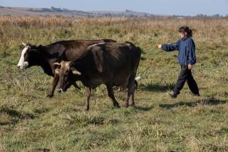 Dana lebt im Haus der Zukunft und verdient sich ein Taschengeld mit dem Hüten der Kühe des Dorfes. (Foto: Achim Pohl)