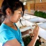 Meerschweinchen (span.: Cuy) sind wichtiger Bestandteil der traditionallen andinen Küche. Ähnlich wie bei uns Hühnchen - Tierhaltung in der eigenen Landwirtschaft des Kinderheims. Lamas in der eigenen Landwirtschaft des Kinderheims Comunidad La Providencia, Cuatro Esquinas. (Foto: Florian Kopp/SMMP)