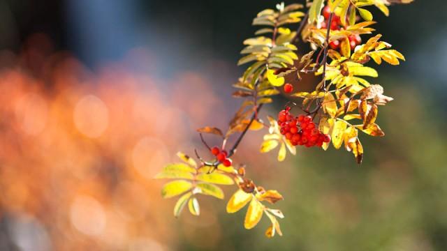 Herbstsonne (Foto: Beer)