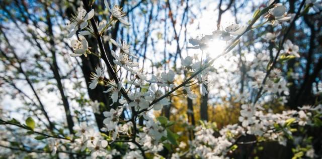 Frühling (Foto: SMMP/Beer)