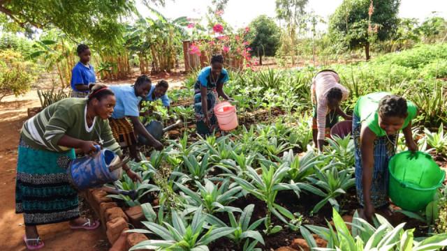 Zu wissen, wie man Obst und Gemüse anbaut, ist in Mosambik enorm wichtig. Deshalb gehört auch dieses Thema in Nametória zum Unterricht für die Frauen. Foto: Sr. Leila de Souza / SMMP